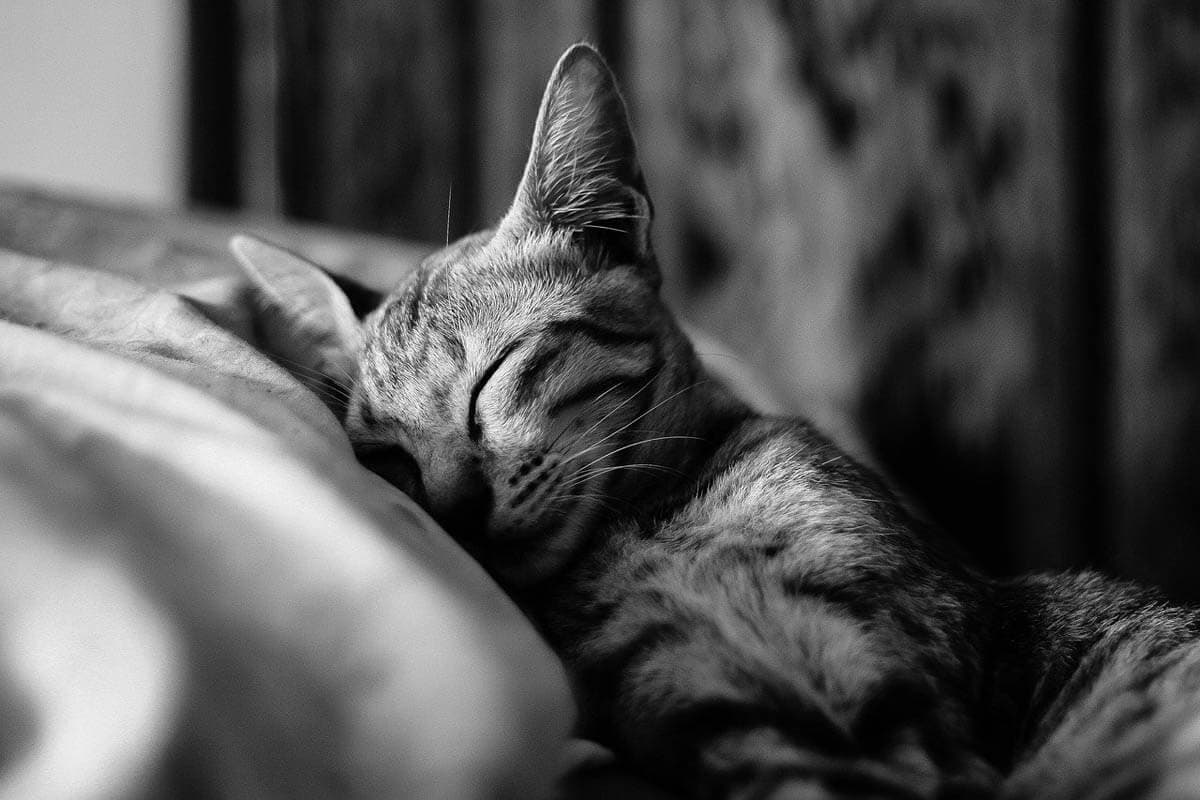Why do cats twitch in their sleep?