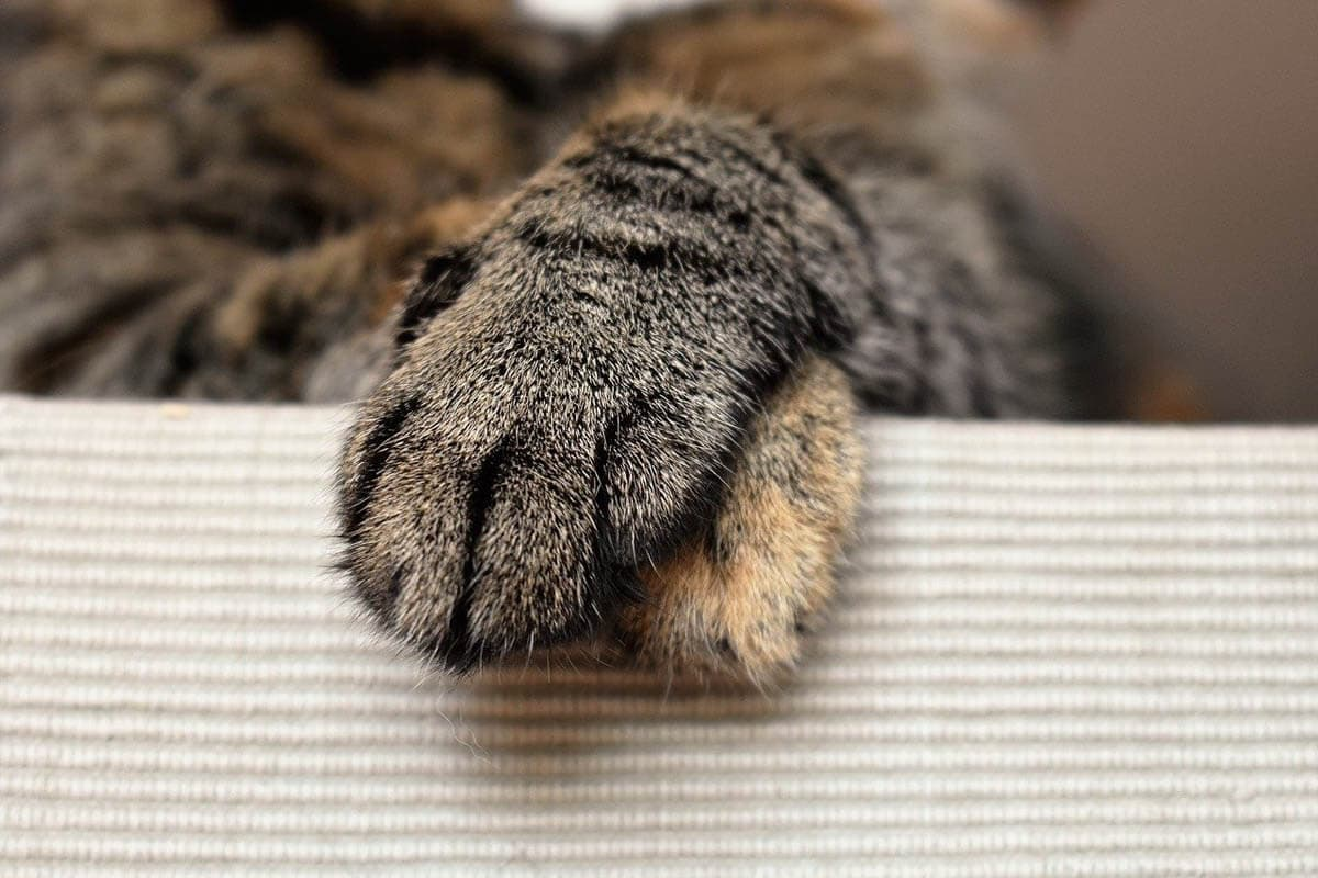 Caring for a cat's paws