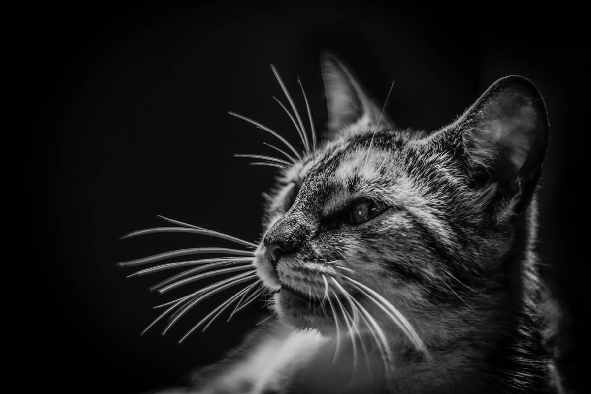 Is pine-sol toxic to cats?