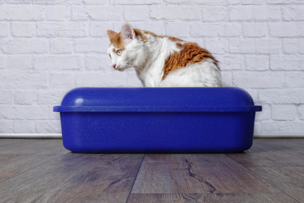 Cat Checklist - Essential Products for New Cat Owners 1