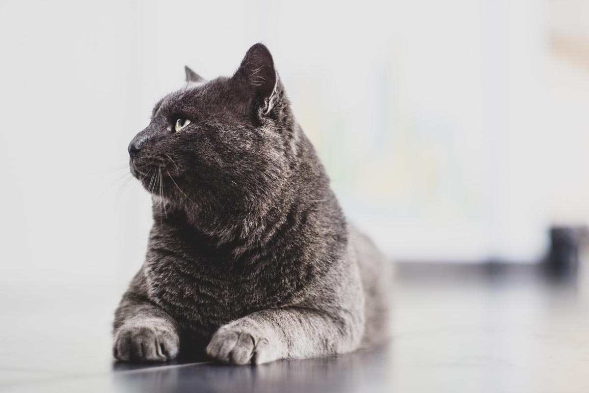 Cat trivia questions and answers