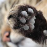 Carpal Pad in Cats: Anatomy and Function