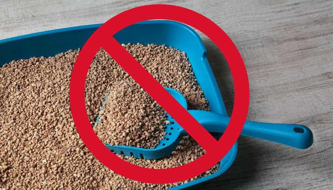 Should you leave a litter tray out for a missing cat?