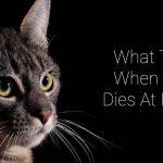 What to Do If a Cat Dies at Home?