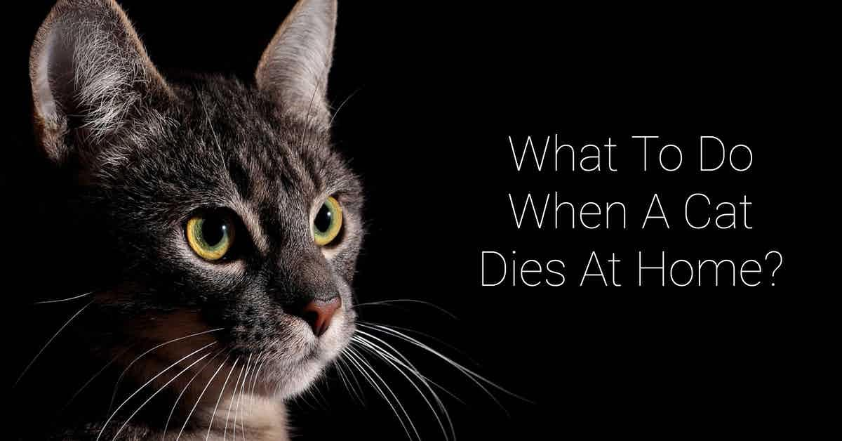 What to do when a cat dies at home?