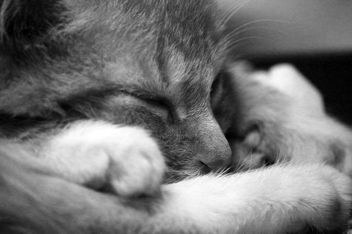 How long does it take a cat to die?