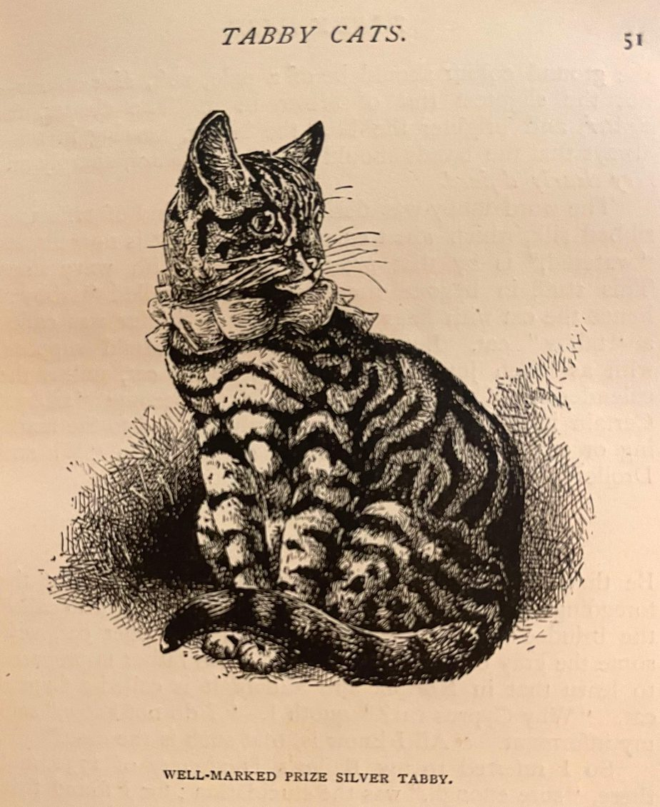 Drawing of a silver tabby cat