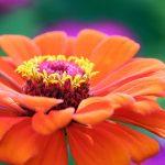 Ten Cat-Safe Flowers For The Garden