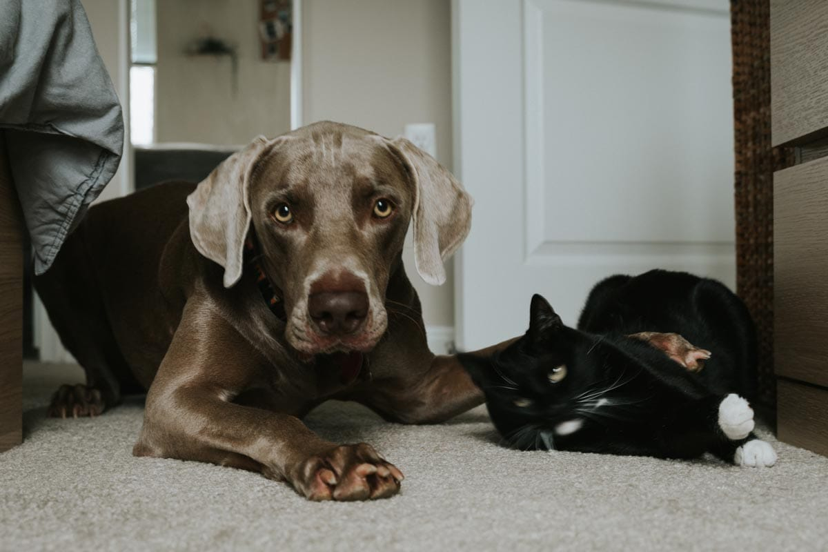 Can cats and dogs mate?