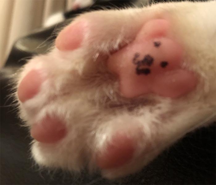 Cat toe beans look like a teddy bear