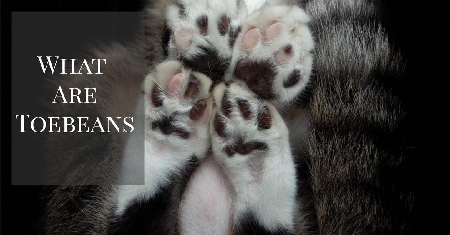 What are toebeans?