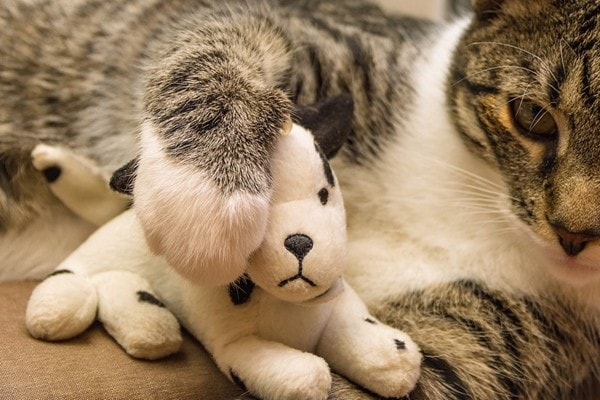 Cat gripping a toy with its dewclaw
