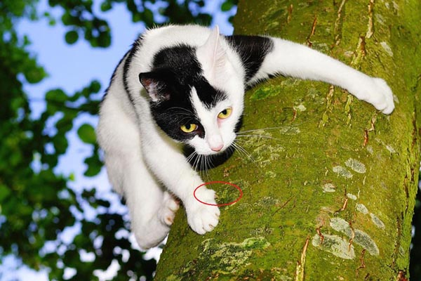 Cat gripping a tree