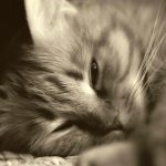 Seven Things to Do on Your Cat's Last Day of Life