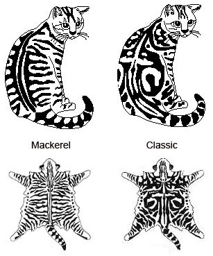 Difference between a classic and mackerel tabby